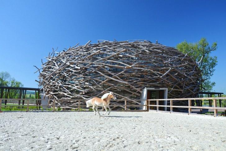 Stork-Nest-Farm-SGL-Projekt-3